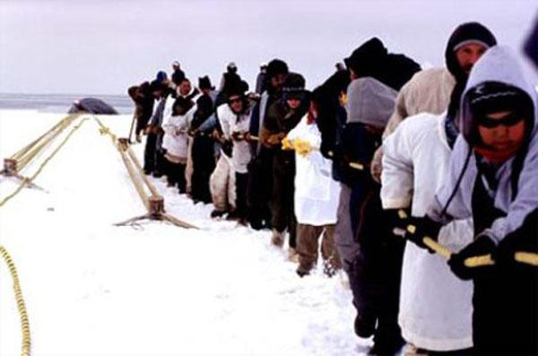 Write an essay on eskimo?