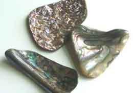 استعمالات حجر  أذن البحـــــر Abalone Shells