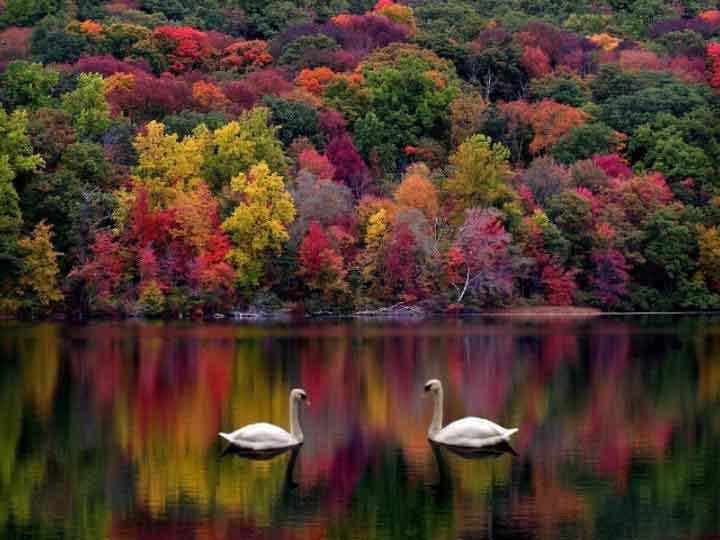 http://www.crystalinks.com/autumncolorslakeswans.jpg