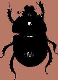 Clase de Defensa Contra las Artes Oscura, Nº2 Beetledung