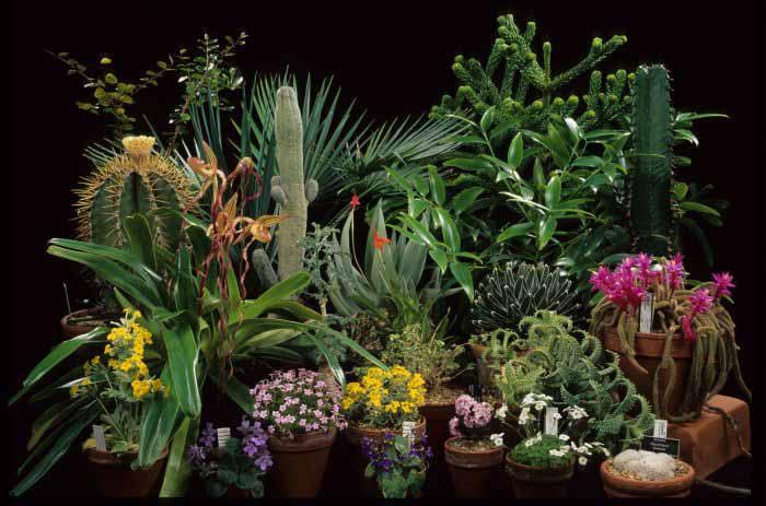 Botany - Crystalinks