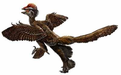 کشف فسیل یک دایناسور پرنده 150 میلیون ساله با چهار بال
