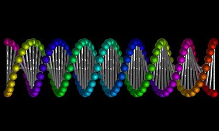 a study of genetic code and the dna The genetic code is the set of rules by which information encoded in genetic material (dna or rna sequences) is translated into proteins 2016 a new scientific study conducted by a team of geneticists has characterized how cells know when to stop translating dna into proteins.