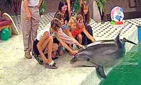 Dolphins - Healing, Metaphysics, and Mythology - Crystalinks