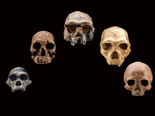 Neanderthals - Crystalinks