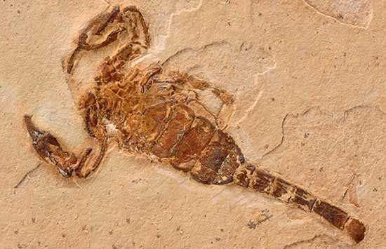 scorpion fossils crystalinks