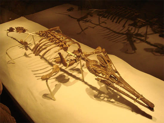 Crocodile Fossils Crystalinks