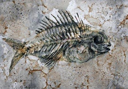 Marine Fossils - Crystalinks
