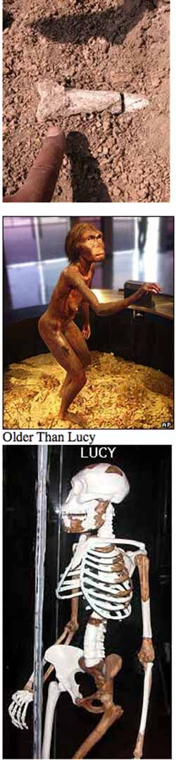 Lucy   One of Our Oldest Human Ancestors  Who were our human