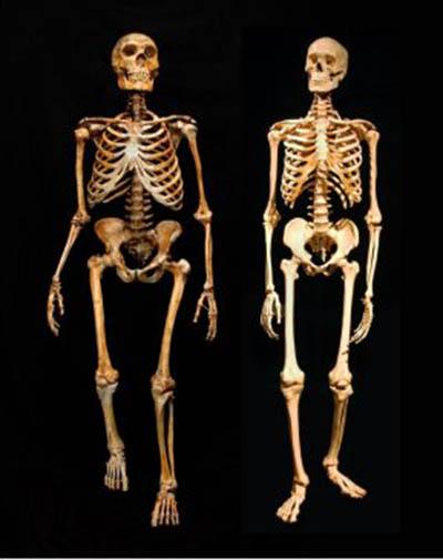 neanderthals - crystalinks, Skeleton