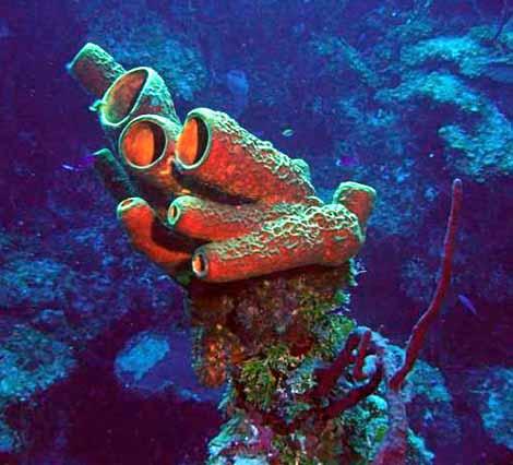 Sea Sponge - Crystalinks