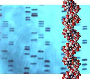 BioTechniques - Genetic fingerprinting used to confirm maternal ...