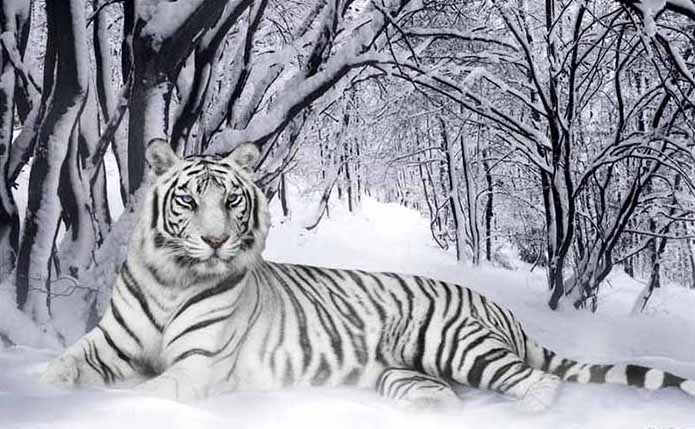 Satoko Japanese Healer The White Tiger